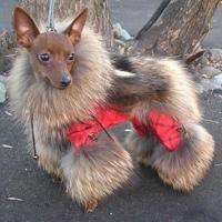 Собачья радость — шубка из норки
